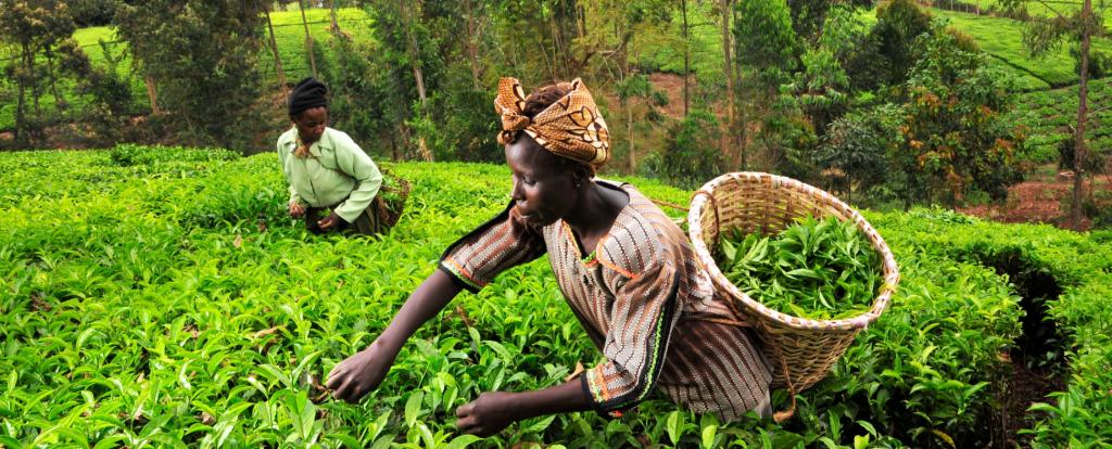aller a Financement des PME vu par les régulateurs : gros plan sur l'Afrique subsaharienne