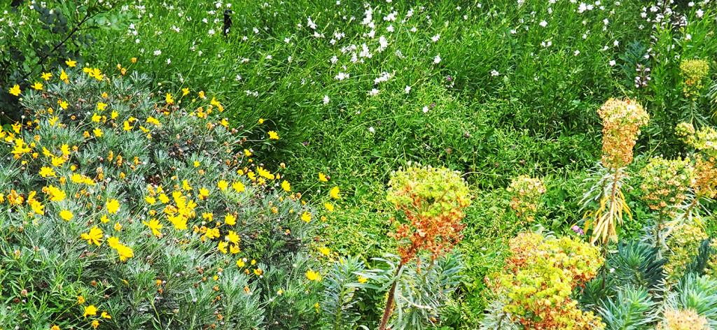 aller a L'approche Nature Positive : faire de la biodiversité une opportunité plutôt qu'un risque
