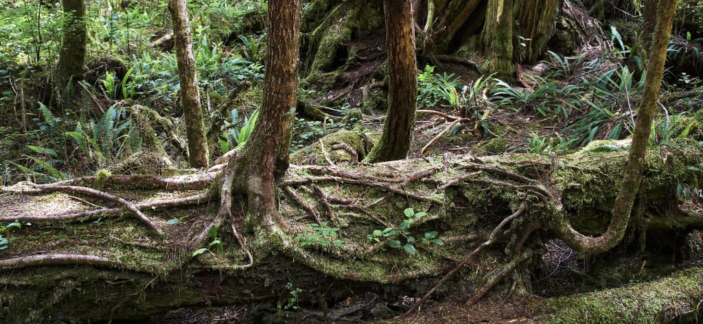aller a Pour une éco-concession systémique, introduction au temps des forêts